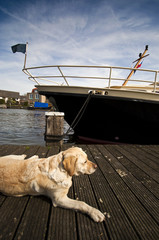 motor boat at the pier