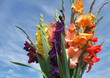 bunch of gladioli flowers
