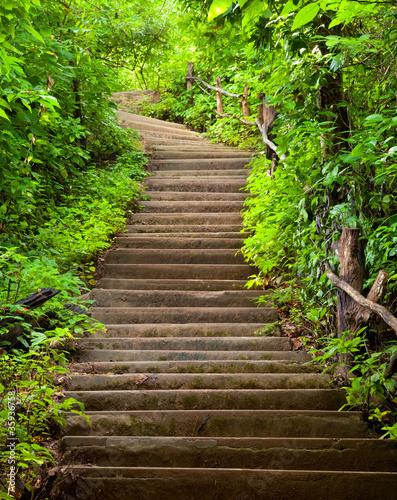 Wall mural Stairway to forest