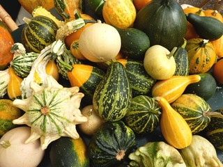 Colorful calabashes in autumn
