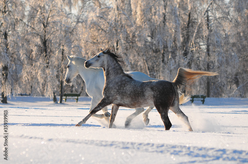 two free horses in winter field