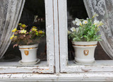 Flower pots in the window with curtains, old, lovable poster