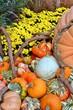 Pumpkins & yellow Mums