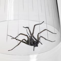 caught spider under a glass bowl