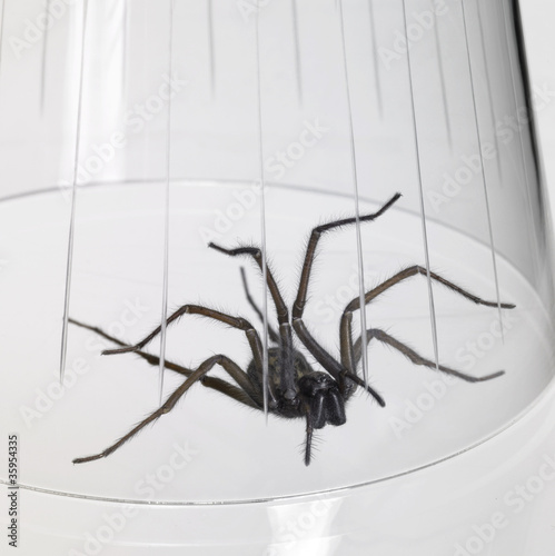 caught spider under a glass bowl
