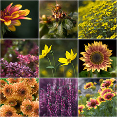 collection of autumnal flowers