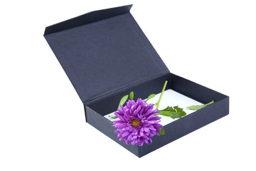 Open gift box with  flower isolated