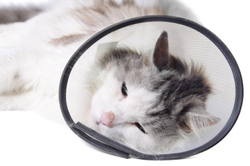 "Cat wearing a protective ""Elizabethan"" collar"