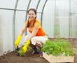 Mature woman planting tomato