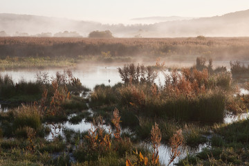 Early morning mist over wetland, Silverdale, Lancashire