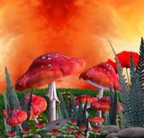 Funghi incantati