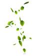feuilles air