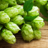 branch of hop on wooden background