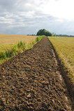Freshly plowed field furrow. poster