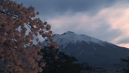 岩木山と桜_夕暮れ