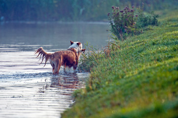 Dog in the water of a lake, Holland