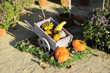 carriola con zucca - Halloween