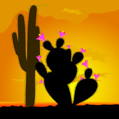 cactus with pink flower