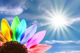 Tournesol multicolore, ciel bleu