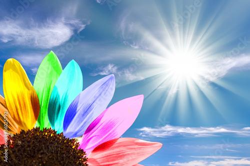 Foto op Aluminium Zonnebloem Tournesol multicolore, ciel bleu