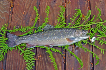 Trout on the table