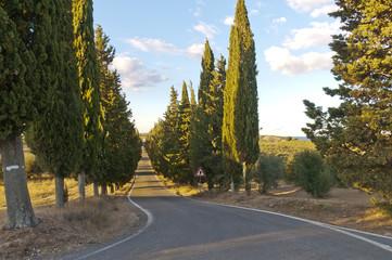 strada con cipressi - Toscana