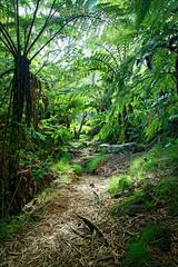 Sentier en forêt tropicale humide - Réunion