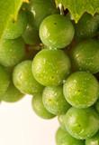 Fototapeta owoc - liść - Owoc