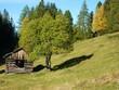 Heustadel im Herbstwald
