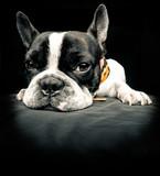 Fototapete Tier - Lonely - Haustiere