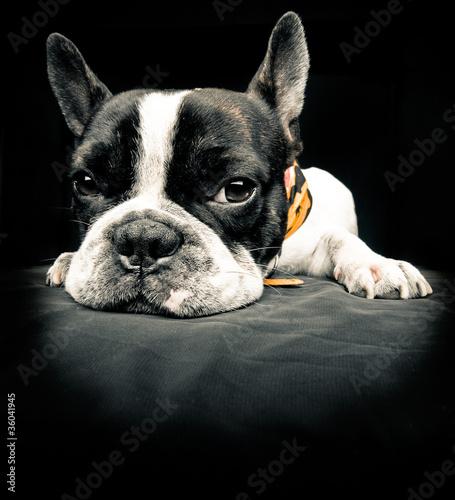 Fototapeta zwierzę - samotny - Zwierzę domowe
