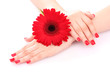 beautiful woman's hands and a flower isolated on white