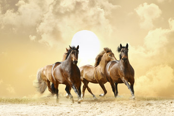 horses run © Mari_art