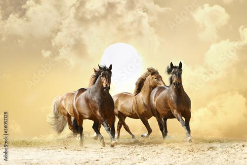 Fridge magnet horses run