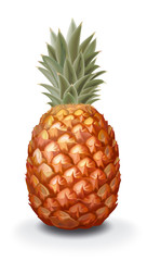 illustration of pineapple