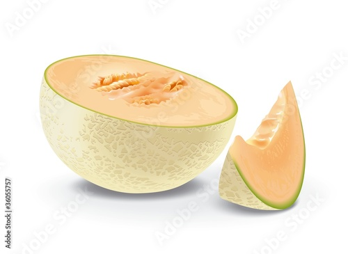illustration of melon