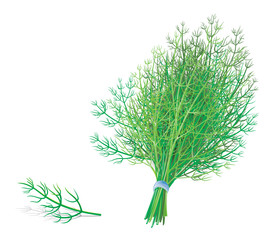 dill or fennel