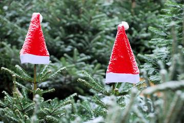 Weihnachtsmützen im Wald