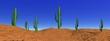 Landscape cactus in desert