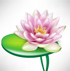 single lotus flowers on leaf