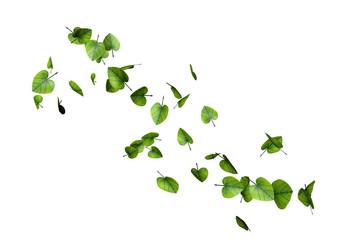 feuilles coeurs