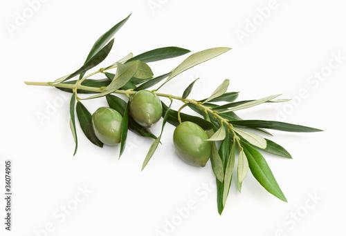 Leinwandbild Motiv Olive