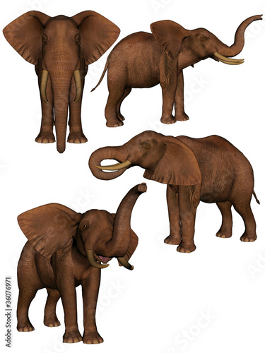 Set of four elephants.