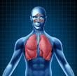 Human sinus with nasal cavity and respiratory system represented by a blue human figure with lungs showing the...
