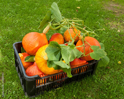Pumpkin crate