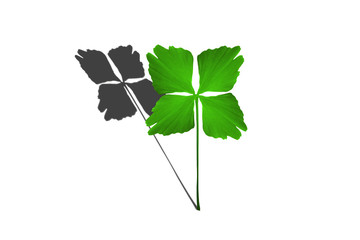 Porte bonheur - Trèfle à 4 feuilles