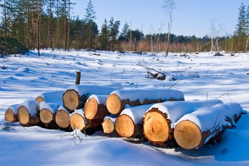heap of pine logs in a winter forest