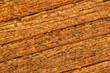 Nasses Holz