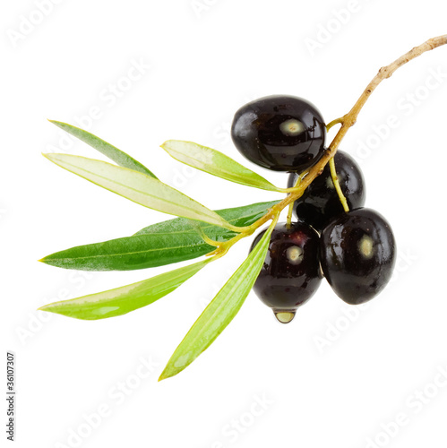 Olive branch with drop of oil - 36107307