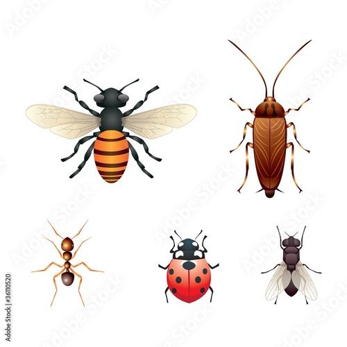 5 insetti